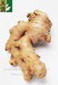 fresh ginger Chinese new crop 2012