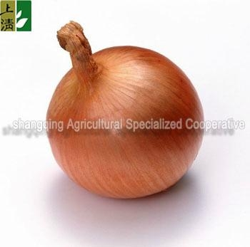 market price for yellow onion 1