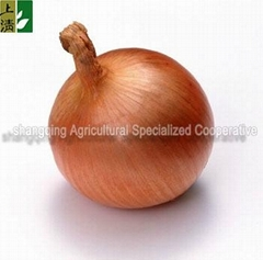 market price for yellow onion