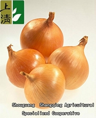 2012 new crop Chinese yellow and red onion