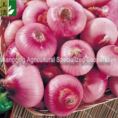 farm fresh red onion