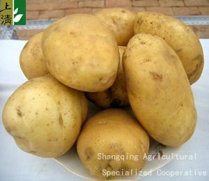 fresh potato new crop 2012 1