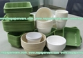 Biodegradable Bagasse Plant Disposable