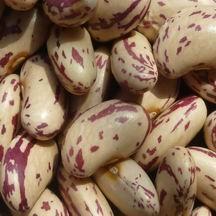 Light Speckled Kidney beans,Long Shape 1