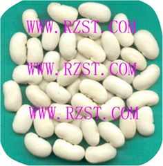 Large White Kidney Beans