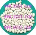 LongWhite Kidney Beans