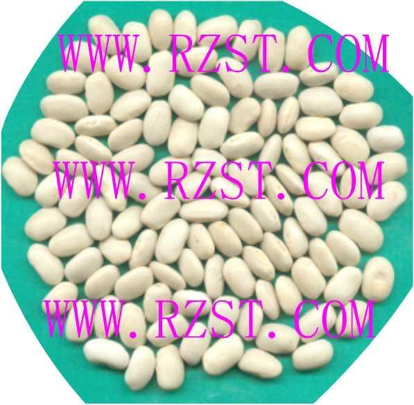 Medium White Kidney Beans 1