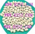 Medium White Kidney Beans