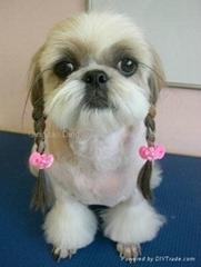 dog bows.pet grooming,dog hair grooming