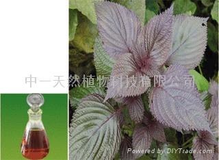 紫甦葉油 1