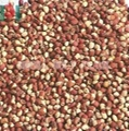 Red cowpea bean