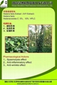 the biggest producer of ivy Extract in