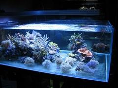 超白玻璃鱼缸