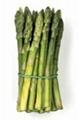 阿波罗芦笋种子