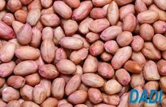 fresh peanut kernels