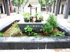 庭園水池綠化(不含基建)