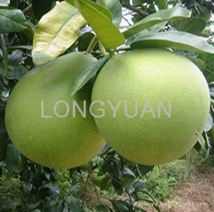 honey pomelo