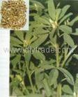 Semen Trigonellea