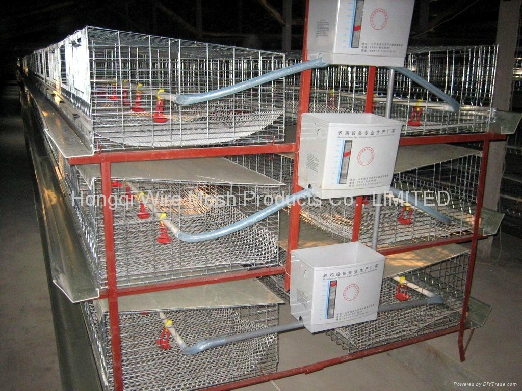 Layer poultry cages with automatic water system hq 2 for Model chicken set