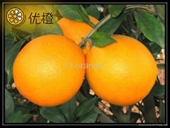 sell frersh fruit