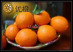 sell navel oranges