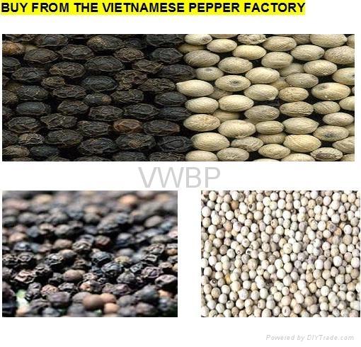 Vietnamese White & Black Pepper 1