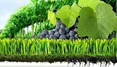 100% Water Soluble  NPK Fertilizer 2