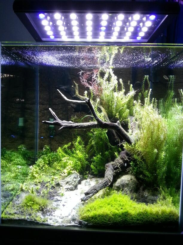 led aquarium light 1
