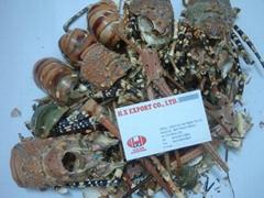 Lobster/Shrimp shell