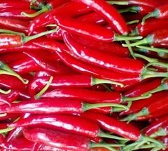Red big chilli