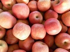 烟台红富士苹果