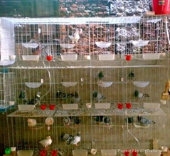 Pigeon Cage in China