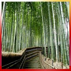 Selling bamboo