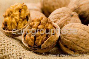 walnuts in shell, walnuts kernel  1