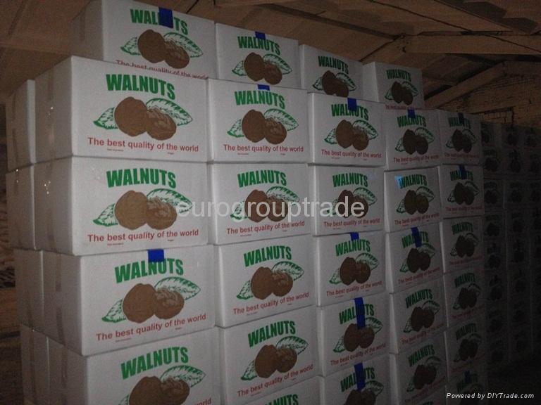 walnuts in shell, walnuts kernel  3