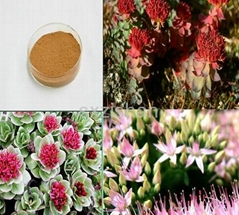 1%-10% Rhodiola plant extract