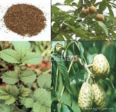 Ginkgo Biloba Leaf plant Extract