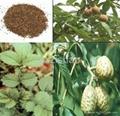 18% 20% Chinese Buckeye Seed plant