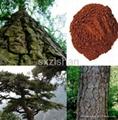 40%-95% Pine Bark plant Extract