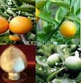 95% 98% Hesperidin plant extract