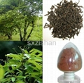 10% Cinnamon Bark plant Extract