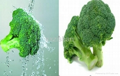 10%, 20:1, 50:1 Broccoli plant extract