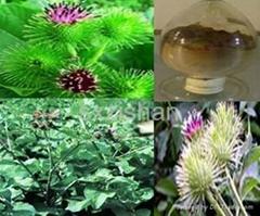 10:1  ArctiumlappaL.  plant extract