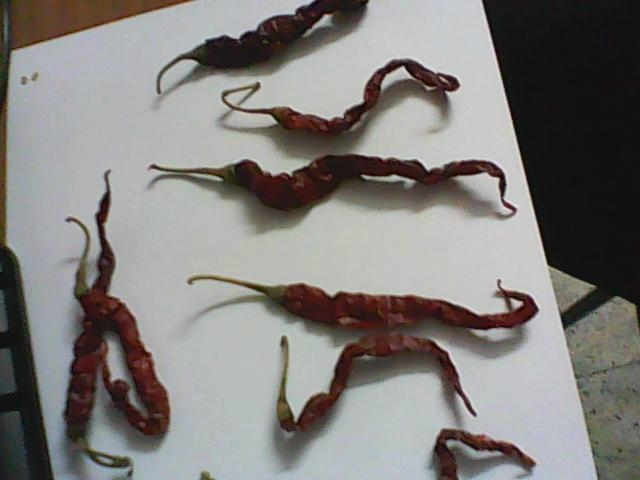 Dried Chillies 3