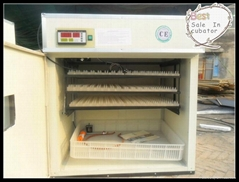 2012 CE Approved 264 eggs Chicken Incubator eggs