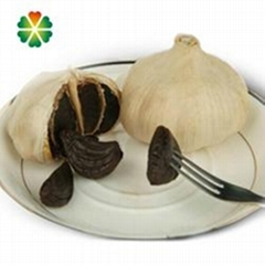 Japanese single clove black garlic