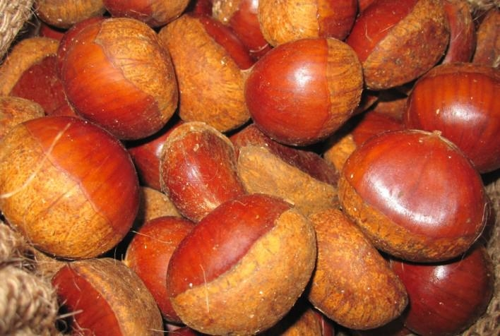 fresh chestnut 1
