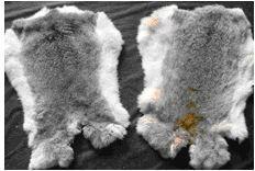 Frozen/Tanned Rabbit Skin