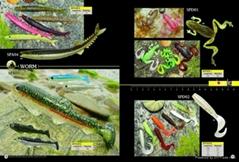 worm series