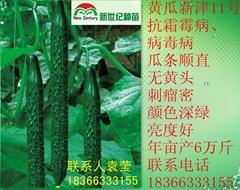 黄瓜种子新津11号